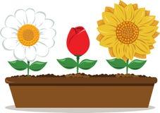 Бак с различными цветками иллюстрация вектора