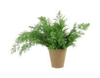 бак торфа травы укропа органический Стоковое Фото