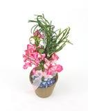 бак торфа цветков бумажный Стоковая Фотография RF