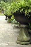 бак цветка большой Стоковые Фото