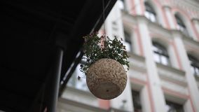 Бак цветков на предпосылке дома в Риге видеоматериал
