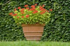 бак цветков Стоковые Фото