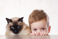 Балиец ребенка кота совместно сыграть молодой стоковая фотография rf