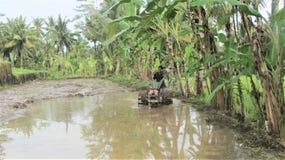 Балийская деятельность человека стоковые изображения
