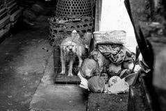 Балийская собака в крошечной клетке стоковое изображение rf