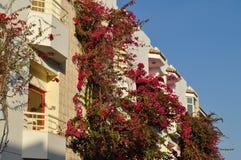 Балкон с огромными розовыми цветками под солнцем в Египте Стоковое Изображение RF