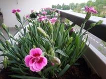 Балкон с цветками Стоковая Фотография