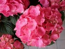 Балкон с цветками Стоковая Фотография RF