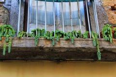 Балкон с цветочными горшками sedum стоковое изображение