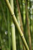 бамбуки пересекая зеленые любя 2 Стоковые Фотографии RF