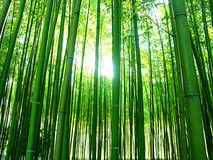 бамбуки Стоковая Фотография RF