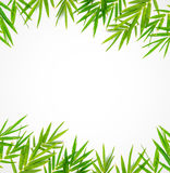 Бамбуковая граница лист стоковое фото