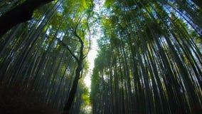 Бамбуковая дорога, Arashiyama, Киото, Осака, Япония акции видеоматериалы