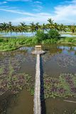 Бамбуковая дорожка и бамбуковая лачуга на пруде стоковые фотографии rf