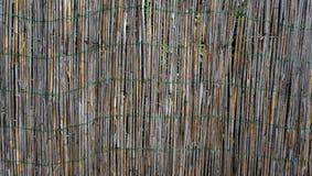 Бамбуковая загородка стены горизонтальная Стоковая Фотография