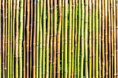 Бамбуковая загородка Стоковое фото RF