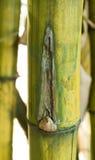 Бамбуковая зеленая предпосылка леса Стоковые Фото