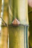 Бамбуковая зеленая предпосылка леса Стоковые Изображения