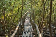 Бамбуковая дорожка в фокусе леса мангровы селективном Стоковая Фотография