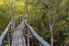 Бамбуковая дорожка в фокусе леса мангровы селективном Стоковое Изображение RF