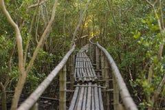Бамбуковая дорожка в фокусе леса мангровы селективном Стоковые Фото