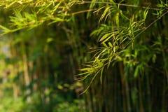 Бамбуковая предпосылка дерева стоковые изображения