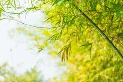 Бамбуковая предпосылка дерева стоковые фотографии rf