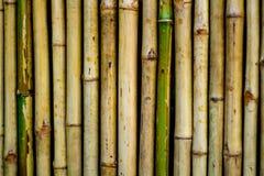 Бамбуковая предпосылка текстуры стены , близкое поднимающее вверх Стоковое Изображение