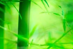Бамбуковая предпосылка нерезкости Стоковая Фотография