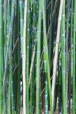 Бамбуковая предпосылка древесины дерева Стоковые Фотографии RF