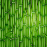Бамбуковая предпосылка Стоковые Изображения RF