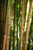 Бамбуковая предпосылка стоковые изображения