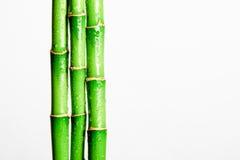 Бамбуковая ручка Стоковая Фотография