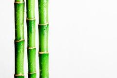 Бамбуковая ручка Стоковое Изображение