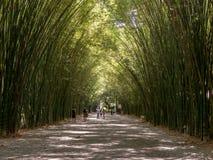 Бамбуковая скала, Chulaporn Voramarn как источник красивый и очень зеленый Стоковые Изображения RF