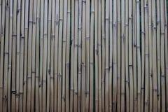 Бамбуковая текстура стены Стоковая Фотография
