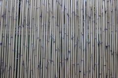 Бамбуковая текстура стены Стоковое Изображение