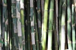 Бамбуковая текстура 2 Стоковые Фото