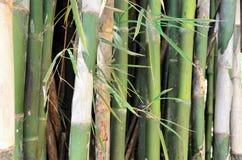 Бамбуковая текстура 1 Стоковое Изображение RF