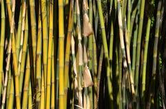 Бамбуковая текстура 7 Стоковые Изображения