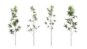Бамбуковое дерево изолированное на белой предпосылке с путем клиппирования стоковое фото rf