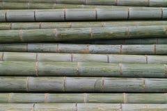 Бамбуковое дерево Стоковая Фотография