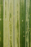 Бамбуковое зеленое semless Стоковое фото RF