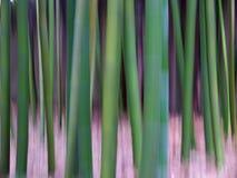 Бамбуковое искусство леса - линии - искусство природы Стоковая Фотография