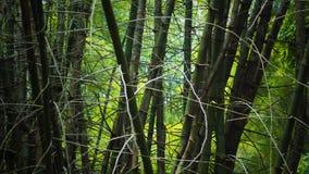 Бамбуковое одичалое грязное Стоковое фото RF