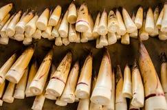 Бамбуковые всходы стоковые фотографии rf