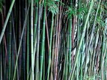 Бамбуковые заводы в природе стоковые изображения