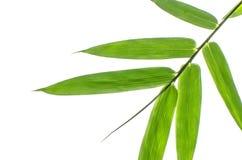 Бамбуковые лист Стоковое Фото