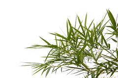Бамбуковые листья изолированные на белой предпосылке с путями клиппирования стоковые изображения