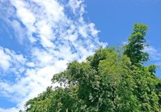 Бамбуковые лист с предпосылкой и облаками голубого неба Стоковые Фотографии RF